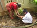 Sapling-Plantation-4