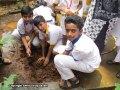 Sapling-Plantation7