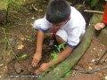 Sapling-Plantation9